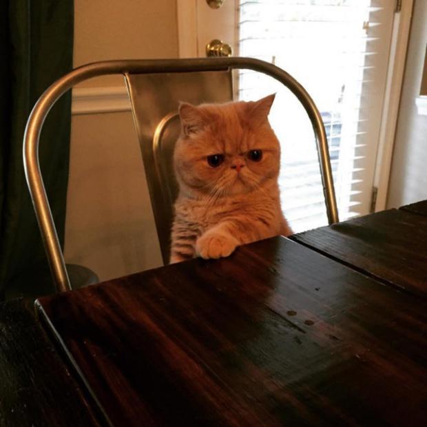 Khi lũ giặc mèo bị bắt quả tang đang quậy tanh bành nhà cửa - Ảnh 1.