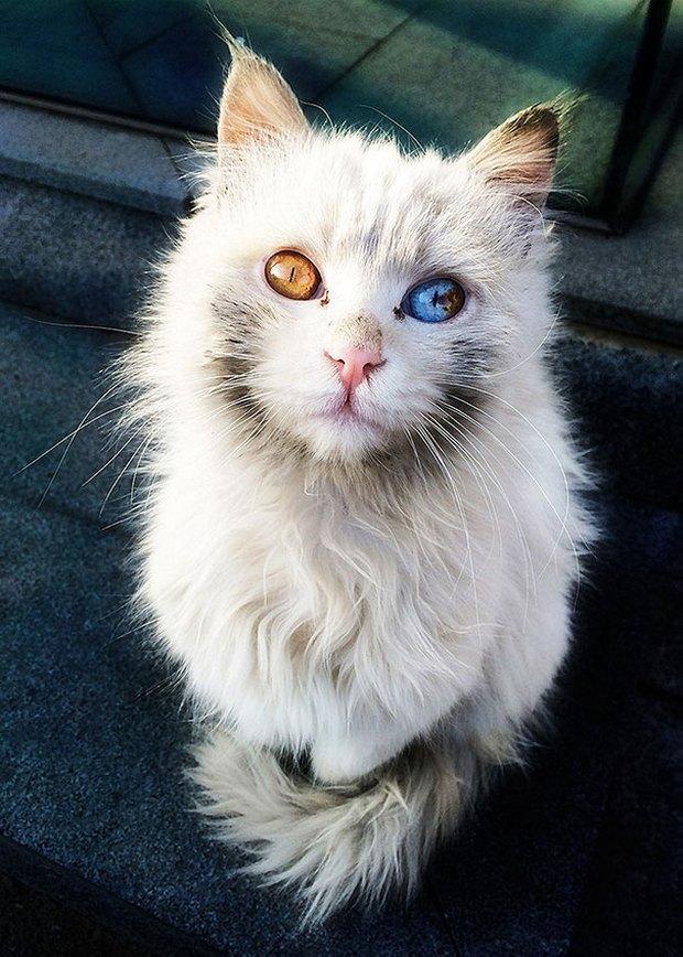 Những chú mèo mang cả dải ngân hà kỳ ảo trong đôi mắt - Ảnh 3.