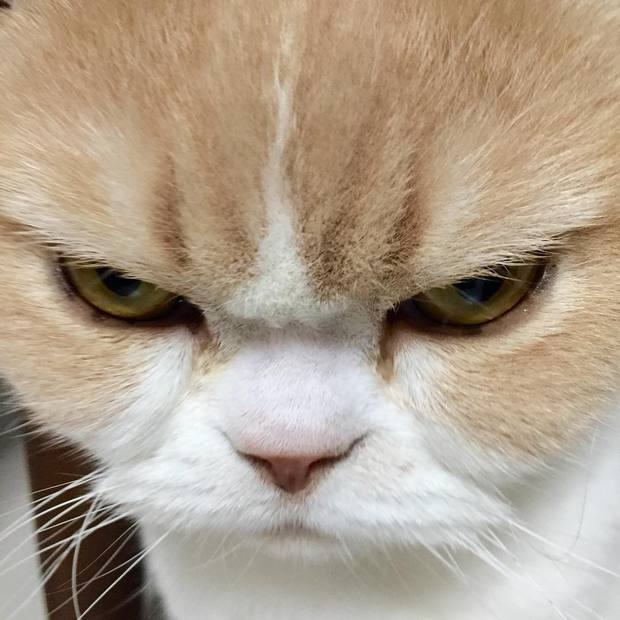 Cô mèo cáu kỉnh với gương mặt như đang dỗi cả thế giới - Ảnh 3.