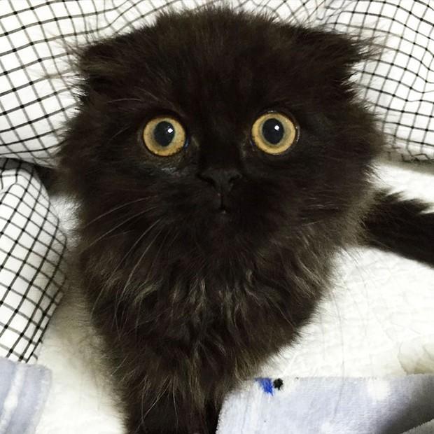 Em mèo mắt to giống hệt nhân vật hoạt hình Ghibli - Ảnh 5.