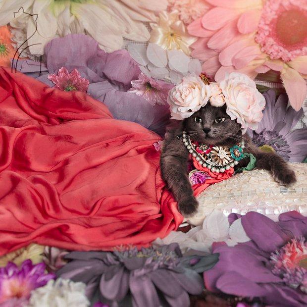 Nàng mèo xinh đẹp vượt khó trở thành fashionista sành điệu - Ảnh 3.