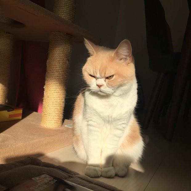 Cô mèo cáu kỉnh với gương mặt như đang dỗi cả thế giới - Ảnh 4.