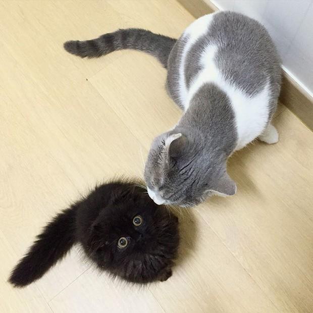 Em mèo mắt to giống hệt nhân vật hoạt hình Ghibli - Ảnh 6.