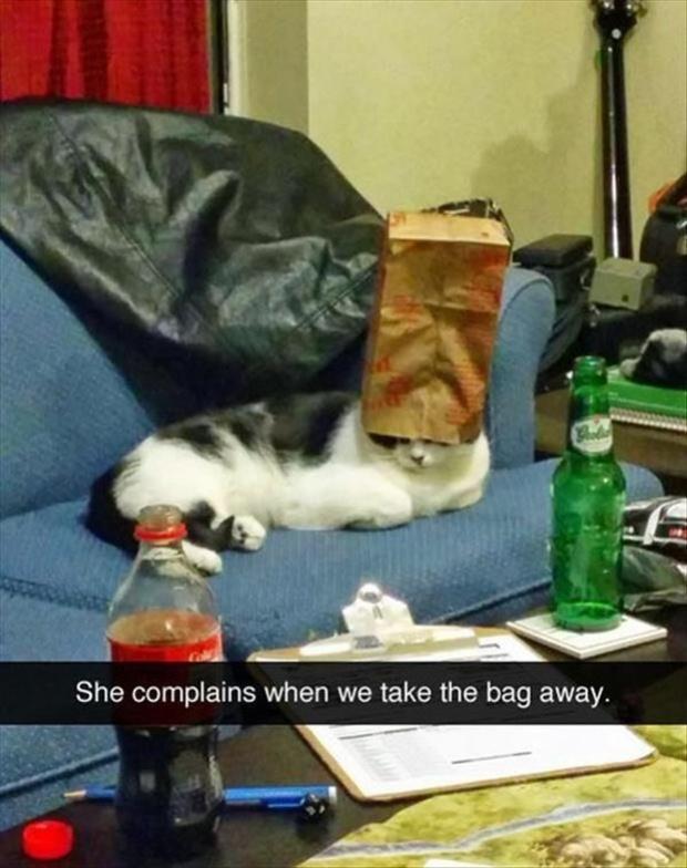 Khi lũ giặc mèo bị bắt quả tang đang quậy tanh bành nhà cửa - Ảnh 6.