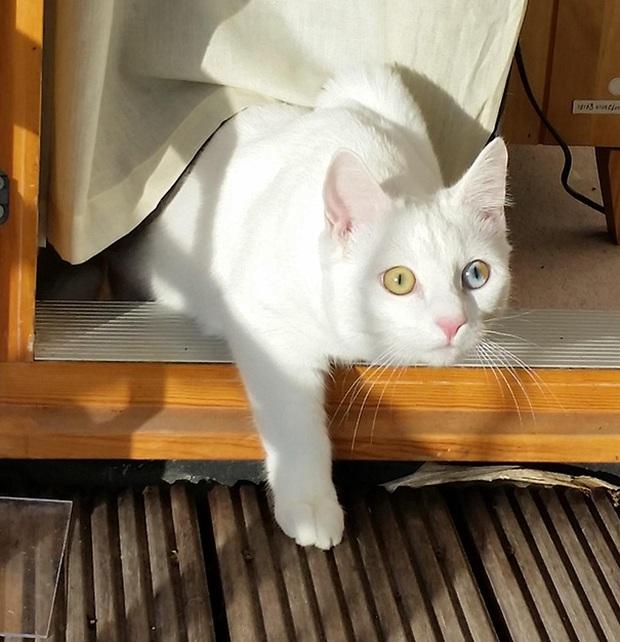 Những chú mèo mang cả dải ngân hà kỳ ảo trong đôi mắt - Ảnh 5.
