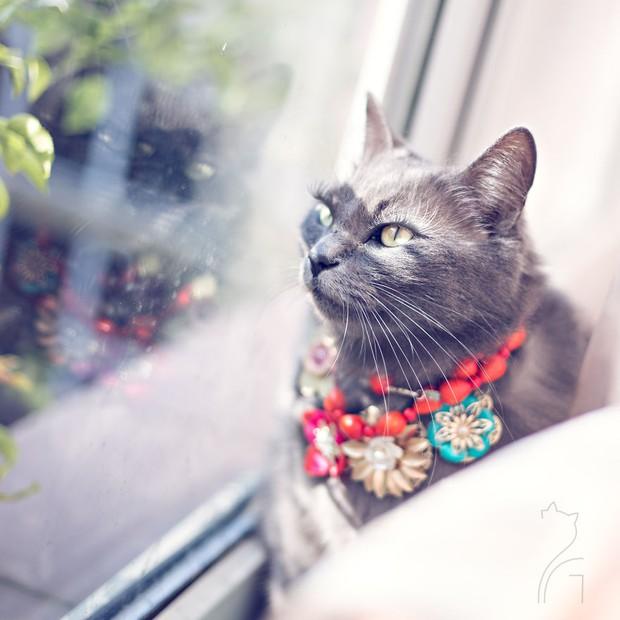 Nàng mèo xinh đẹp vượt khó trở thành fashionista sành điệu - Ảnh 4.