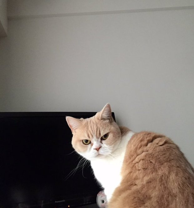 Cô mèo cáu kỉnh với gương mặt như đang dỗi cả thế giới - Ảnh 5.