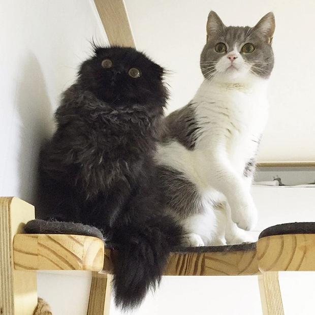 Em mèo mắt to giống hệt nhân vật hoạt hình Ghibli - Ảnh 8.