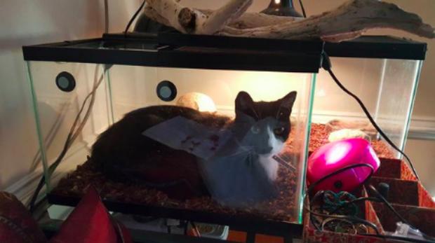Khi lũ giặc mèo bị bắt quả tang đang quậy tanh bành nhà cửa - Ảnh 2.