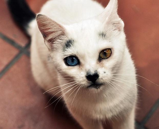 Những chú mèo mang cả dải ngân hà kỳ ảo trong đôi mắt - Ảnh 6.