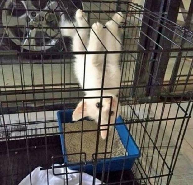 Khi lũ giặc mèo bị bắt quả tang đang quậy tanh bành nhà cửa - Ảnh 4.