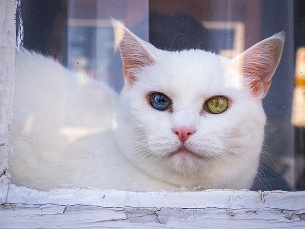 Những chú mèo mang cả dải ngân hà kỳ ảo trong đôi mắt - Ảnh 7.