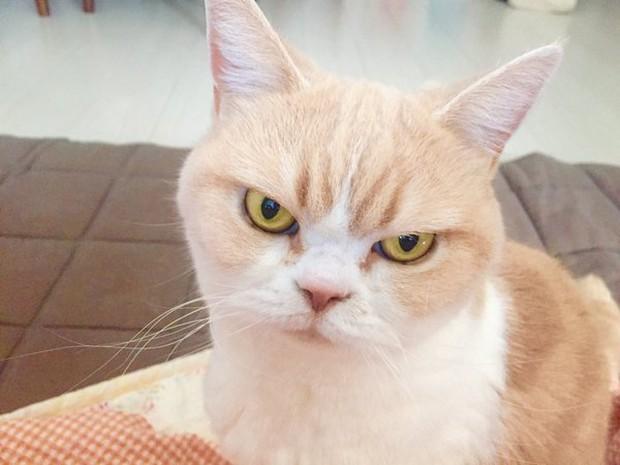 Cô mèo cáu kỉnh với gương mặt như đang dỗi cả thế giới - Ảnh 7.