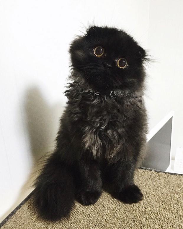 Em mèo mắt to giống hệt nhân vật hoạt hình Ghibli - Ảnh 7.