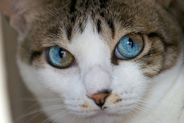 Những chú mèo mang cả dải ngân hà kỳ ảo trong đôi mắt - Ảnh 8.
