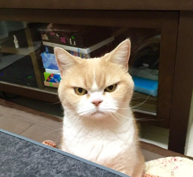 Cô mèo cáu kỉnh với gương mặt như đang dỗi cả thế giới - Ảnh 8.