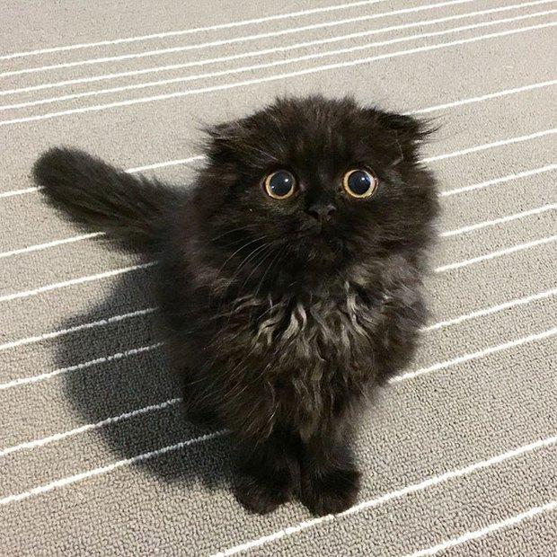 Em mèo mắt to giống hệt nhân vật hoạt hình Ghibli - Ảnh 10.