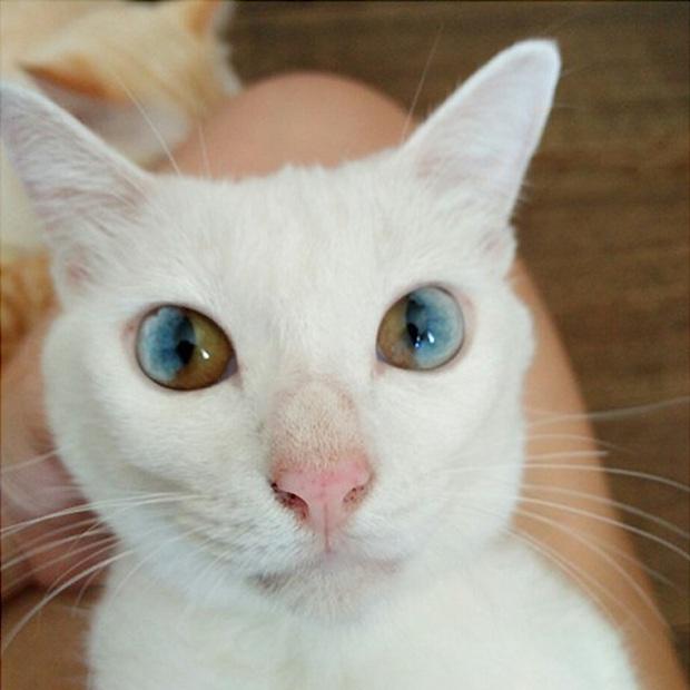 Những chú mèo mang cả dải ngân hà kỳ ảo trong đôi mắt - Ảnh 9.
