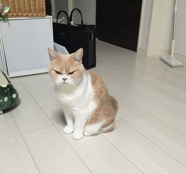 Cô mèo cáu kỉnh với gương mặt như đang dỗi cả thế giới - Ảnh 9.