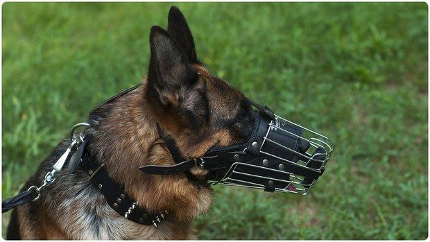 Ở nhiều nước trên thế giới, có bắt buộc phải rọ mõm chó khi dắt chúng đi dạo? - Ảnh 2.