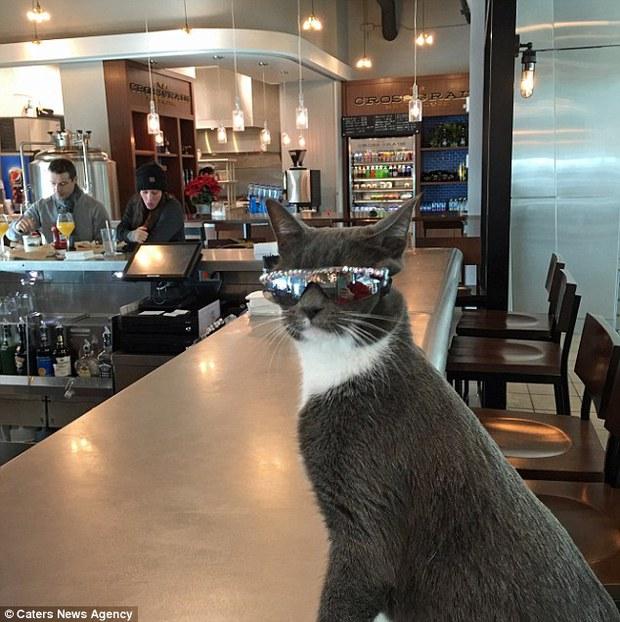 Bé mèo trở thành ngôi sao bất đắc dĩ nhờ căn bệnh bẩm sinh - Ảnh 2.