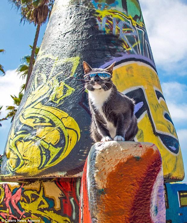 Bé mèo trở thành ngôi sao bất đắc dĩ nhờ căn bệnh bẩm sinh - Ảnh 11.