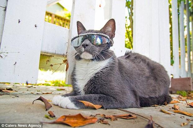 Bé mèo trở thành ngôi sao bất đắc dĩ nhờ căn bệnh bẩm sinh - Ảnh 14.