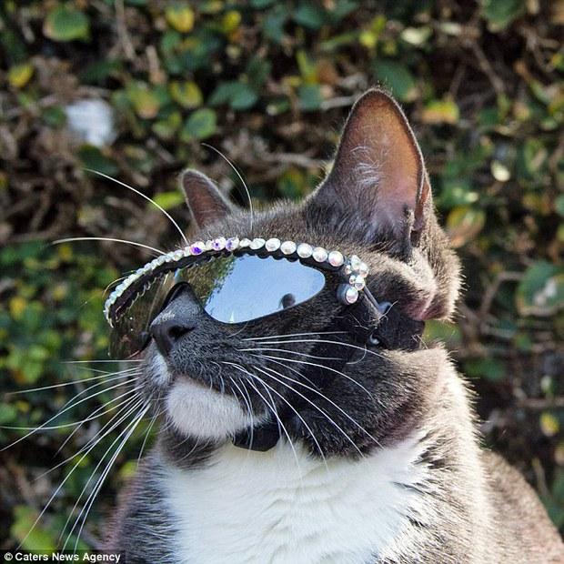 Bé mèo trở thành ngôi sao bất đắc dĩ nhờ căn bệnh bẩm sinh - Ảnh 15.