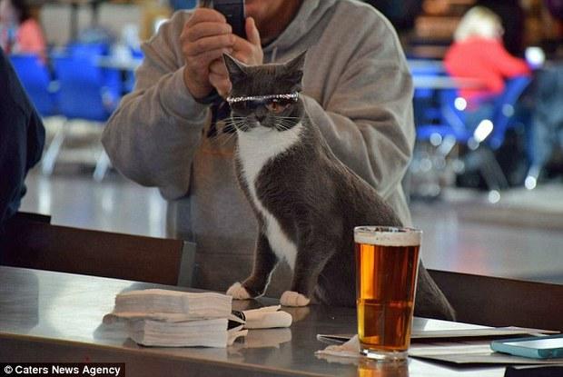 Bé mèo trở thành ngôi sao bất đắc dĩ nhờ căn bệnh bẩm sinh - Ảnh 4.