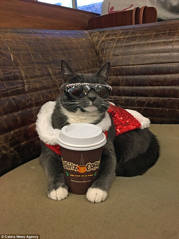 Bé mèo trở thành ngôi sao bất đắc dĩ nhờ căn bệnh bẩm sinh - Ảnh 5.