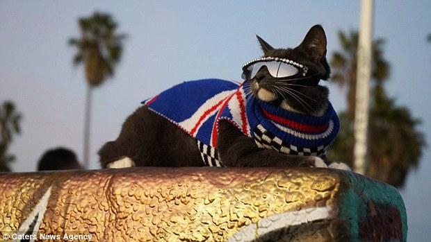 Bé mèo trở thành ngôi sao bất đắc dĩ nhờ căn bệnh bẩm sinh - Ảnh 6.