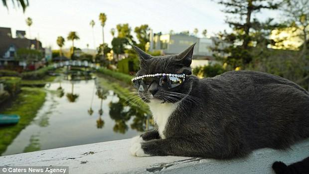 Bé mèo trở thành ngôi sao bất đắc dĩ nhờ căn bệnh bẩm sinh - Ảnh 8.
