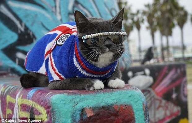 Bé mèo trở thành ngôi sao bất đắc dĩ nhờ căn bệnh bẩm sinh - Ảnh 9.