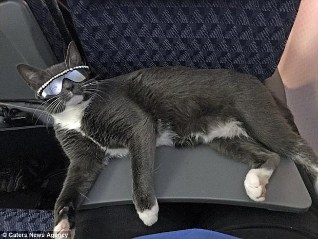 Bé mèo trở thành ngôi sao bất đắc dĩ nhờ căn bệnh bẩm sinh - Ảnh 10.