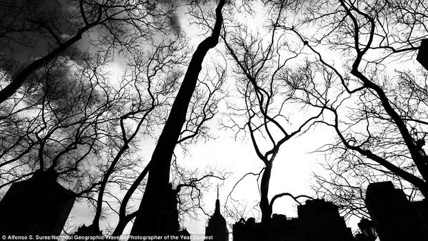 13 bức hình đẹp hút hồn về thành phố không ngủ New York - Ảnh 11.