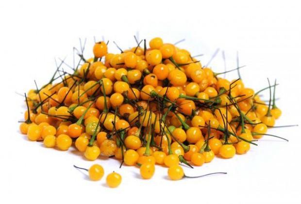 Loại ớt nhà giàu có giá hơn nửa tỷ đồng, chưa ăn cũng thấy sang miệng - Ảnh 3.