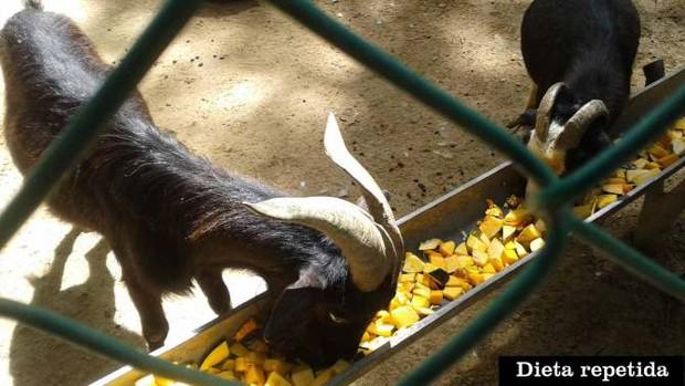 Quá đói, người dân Venezuela phải cướp sở thú để ăn thịt động vật - Ảnh 2.