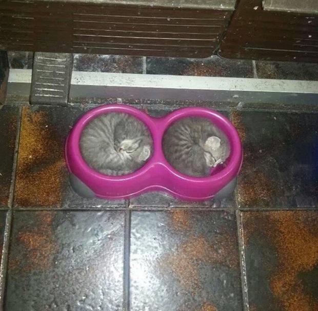 Những chú mèo bạ đâu ngủ đấy nhưng đáng yêu chết đi được