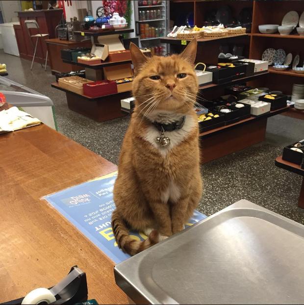 9 năm cần mẫn trông cửa hàng không nghỉ, chú mèo này đã trở nên nổi tiếng khắp New York - Ảnh 1.