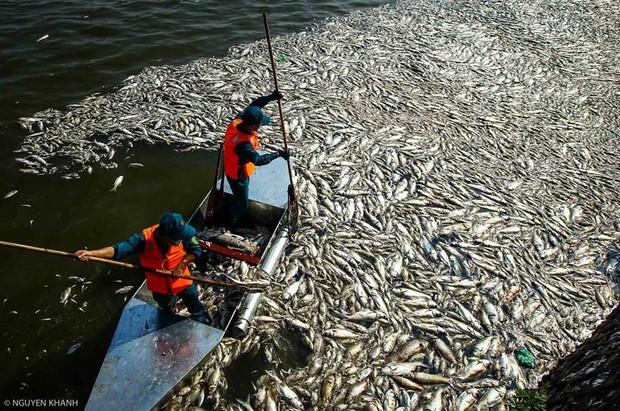 Những xác cá nặng hàng cân nổi lềnh bềnh - cảnh tượng đầy ám ảnh ở hồ Tây ngày hôm nay! - Ảnh 9.