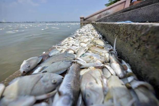 Những xác cá nặng hàng cân nổi lềnh bềnh - cảnh tượng đầy ám ảnh ở hồ Tây ngày hôm nay! - Ảnh 8.