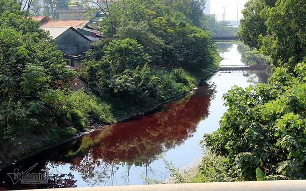 Hà Nội: Lềnh bềnh rau muống trên dòng sông đỏ quạch - Ảnh 1.