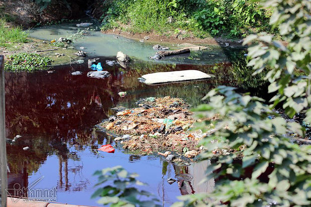 Hà Nội: Lềnh bềnh rau muống trên dòng sông đỏ quạch - Ảnh 13.