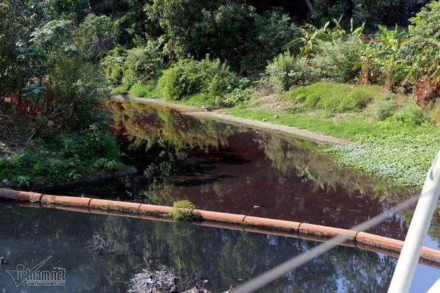 Hà Nội: Lềnh bềnh rau muống trên dòng sông đỏ quạch - Ảnh 3.