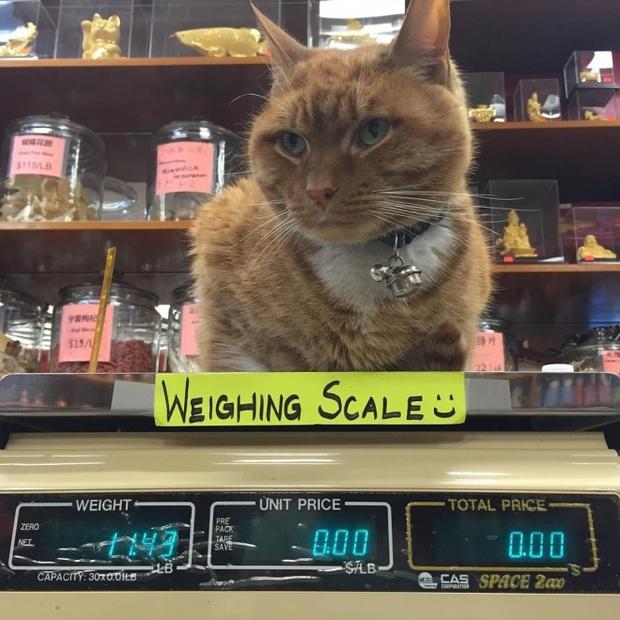 9 năm cần mẫn trông cửa hàng không nghỉ, chú mèo này đã trở nên nổi tiếng khắp New York - Ảnh 3.