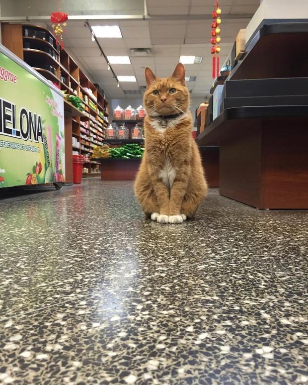 9 năm cần mẫn trông cửa hàng không nghỉ, chú mèo này đã trở nên nổi tiếng khắp New York - Ảnh 5.
