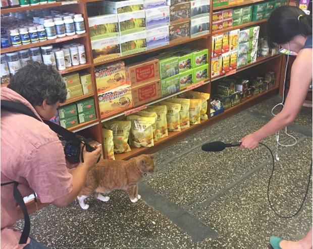 9 năm cần mẫn trông cửa hàng không nghỉ, chú mèo này đã trở nên nổi tiếng khắp New York - Ảnh 9.