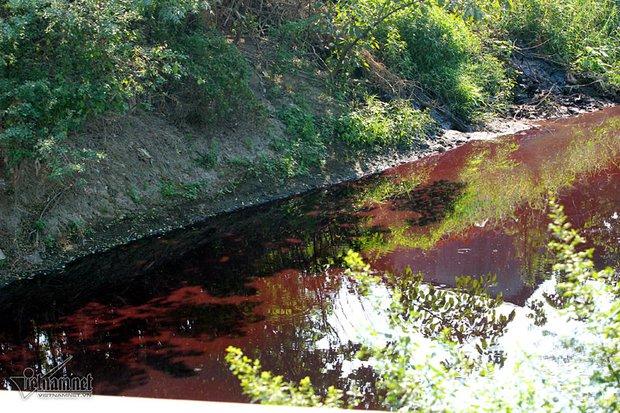 Hà Nội: Lềnh bềnh rau muống trên dòng sông đỏ quạch - Ảnh 6.