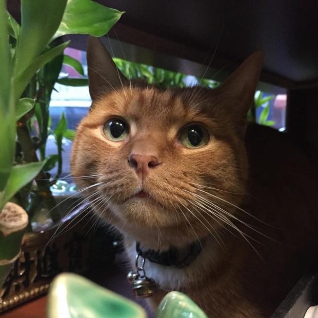9 năm cần mẫn trông cửa hàng không nghỉ, chú mèo này đã trở nên nổi tiếng khắp New York - Ảnh 4.