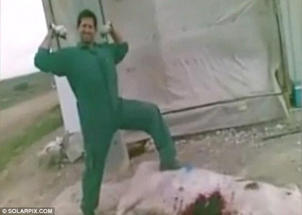 Tây Ban Nha: Hai tên đồ tể tra tấn, giết hại lợn đang mang thai dã man - Ảnh 3.